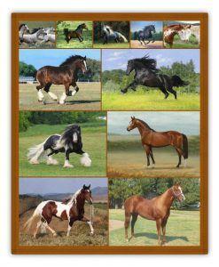 soñando con diferentes tipos de caballos