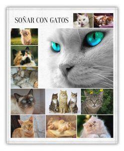 gatos y sus interpretaciones en sueños