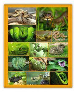 diferentes tipos de sueños con serpientes
