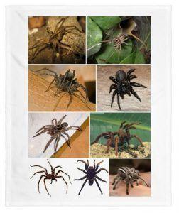 sueño con varias arañas