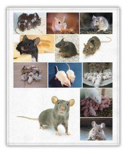 soñando con ratones