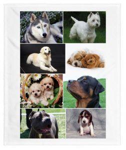 sueños con perros